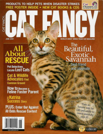Beautiful Afrikhan cat on the cover of Cat Fancy Magazine